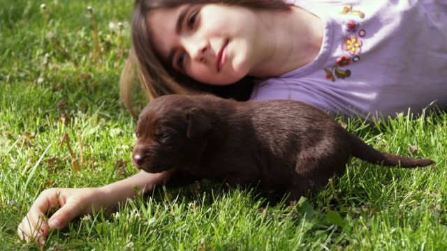 cu girl (10-11) lying on grass with puppy / sunderland, vermont, usa - auf der seite liegen stock-videos und b-roll-filmmaterial