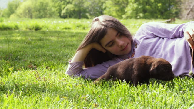 ms girl (10-11) lying on grass with puppy / sunderland, vermont, usa - auf der seite liegen stock-videos und b-roll-filmmaterial