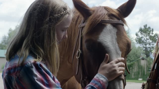 vídeos de stock e filmes b-roll de a girl pats a horse's head - nariz de animal