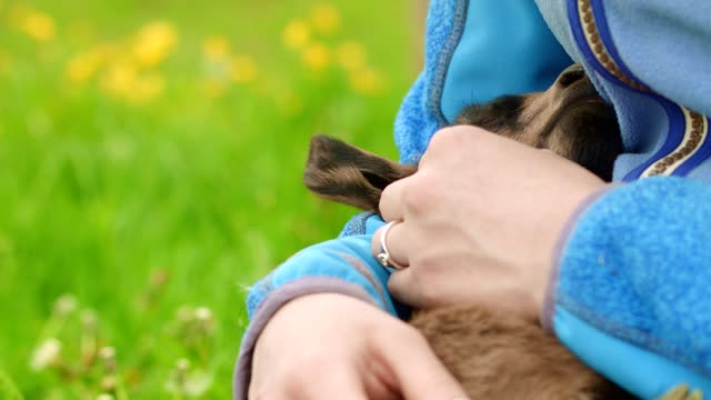 girl petting fawn - livestock stock videos & royalty-free footage