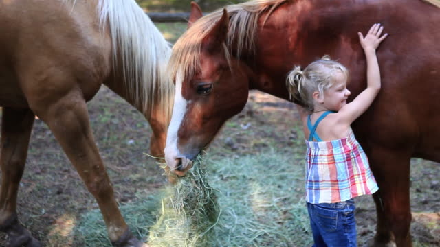 ms girl petting horse / idaho, united states - stroking stock videos & royalty-free footage