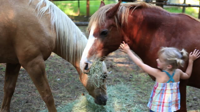 ms girl petting horses / idaho, united states - stroking stock videos & royalty-free footage