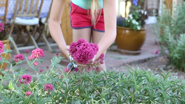 girl picking and arranging flowers from her garden
