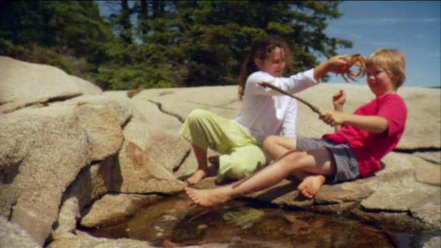 sm ws girl picking crab out of tide pool and teasing boy with it / vinalhaven, maine, usa - tide pool stock videos and b-roll footage