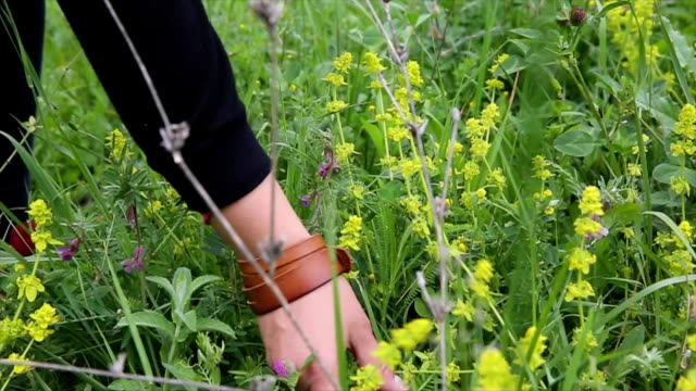 girl picking wild flowers in field - wildflower stock videos and b-roll footage