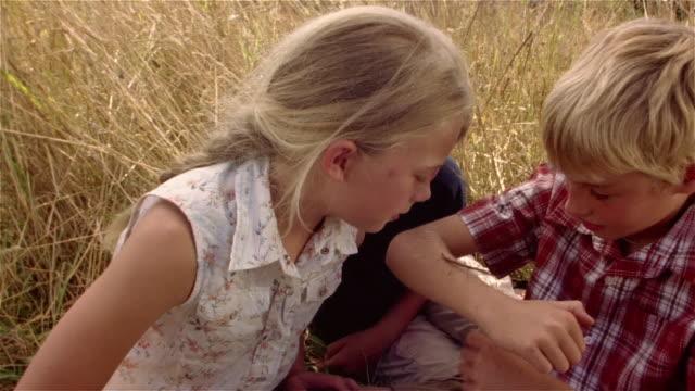 vídeos de stock, filmes e b-roll de girl placing stick bug on boy's arm / children watching bug crawl across boy's arm - irmão
