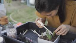 Girl Plant a cactus.