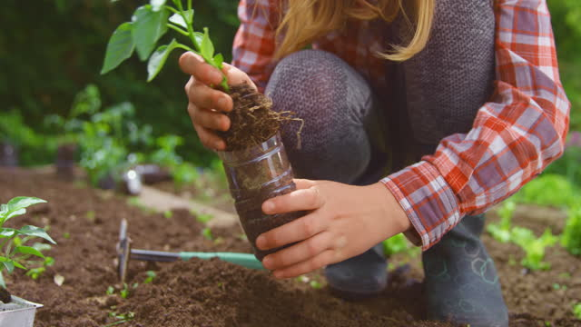 slo mo girl planting a pepper into the garden bed - leggings stock videos & royalty-free footage