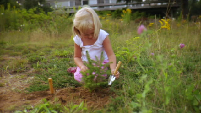vidéos et rushes de ms girl planting evergreen tree in yard and digging with trowel / vinalhaven, maine, usa - plante