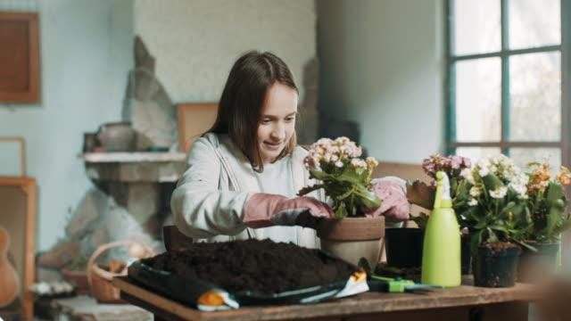 vídeos de stock e filmes b-roll de girl planting flowers - colocar planta em vaso