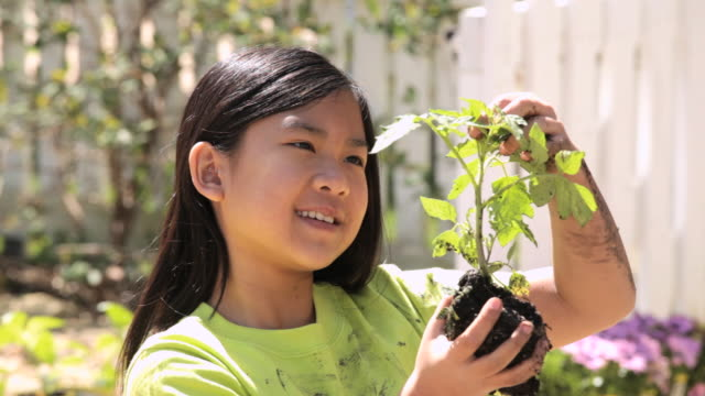 vídeos de stock, filmes e b-roll de cu ws td girl planting organic seedling / richmond, virginia, united state - planta de vaso