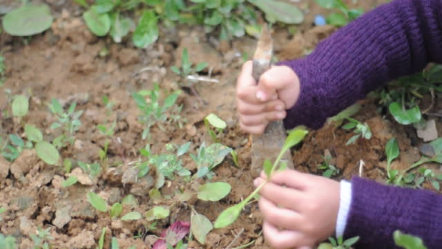 girl planting vegetable plant in a nursary - indigenous north american culture stock videos and b-roll footage