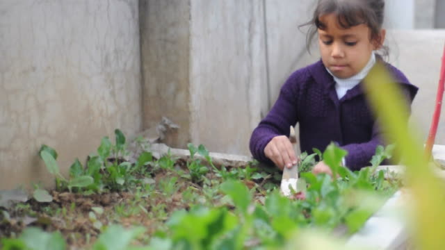 girl planting vegetables in a garden - indigenous north american culture stock videos and b-roll footage