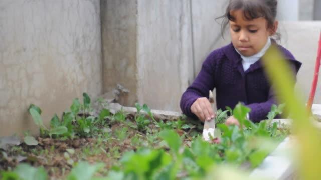 Girl planting vegetables in a garden
