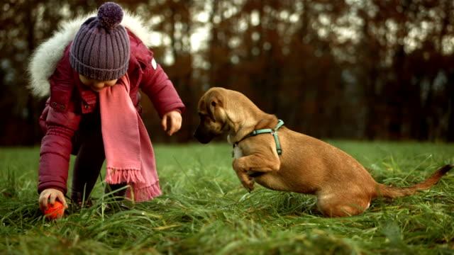 hd: mädchen spielt ball mit ihrem hund - fangen stock-videos und b-roll-filmmaterial