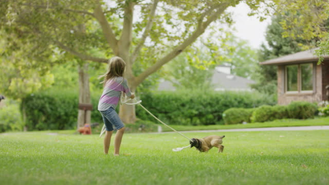 vídeos de stock, filmes e b-roll de girl playing tug-of-war with puppy in grass / provo, utah, united states - somente crianças