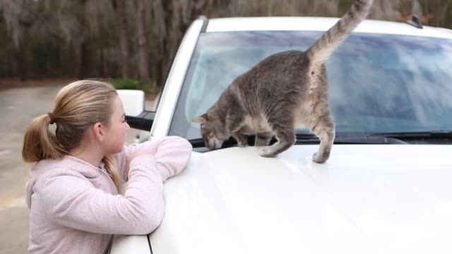 vidéos et rushes de girl playing with cat on roof of car - 4x4