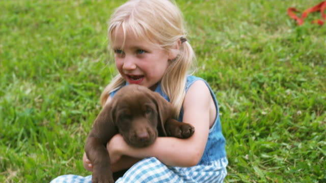 CU TD Girl playing with Chocolate Labrador lying on back on meadow, Sunderland, Vermont, USA