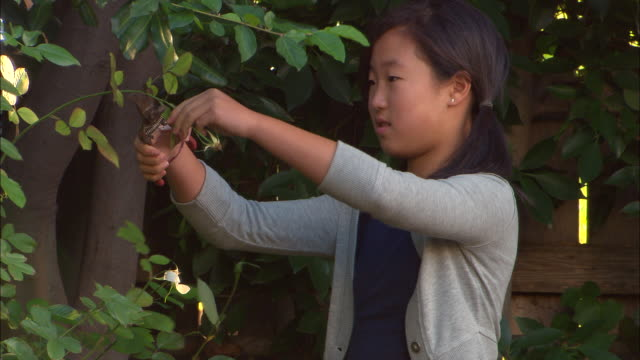 ms, girl (10-11) pruning bush in garden, los angeles, california, usa - secateurs stock videos & royalty-free footage