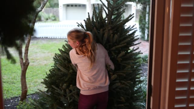 girl pulling Christmas tree into home