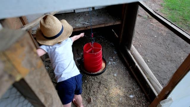 女の子は鶏小屋に鶏の飼料を入れます - 家畜点の映像素材/bロール