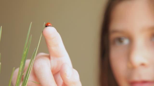 vídeos y material grabado en eventos de stock de cu girl putting ladybug on the tip of grass / flagstaff, arizona, usa - mariquita