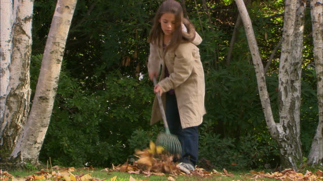 vídeos de stock e filmes b-roll de ms, girl (10-11) raking leaves in garden, los angeles, california, usa - ancinho equipamento de jardinagem