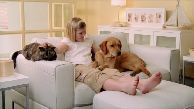 ms, girl (8-9) reclining on sofa with calico cat and golden retriever - dog and cat stock videos and b-roll footage