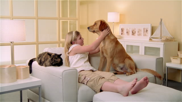 MS, Girl (8-9) reclining on sofa with calico cat and Golden Retriever