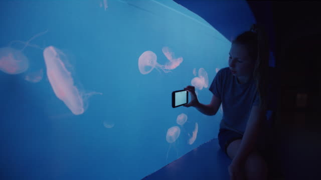 girl recording jellyfish swimming in water changing from green to blue in aquarium with cell phone / draper, utah, united states - fotografische themen stock-videos und b-roll-filmmaterial