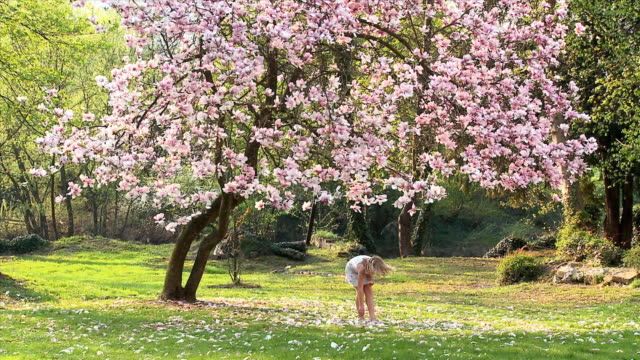ws girl (8-9) running toward magnolia tree, picking flower petals, vrhnika, slovenia - vrhnika stock videos & royalty-free footage