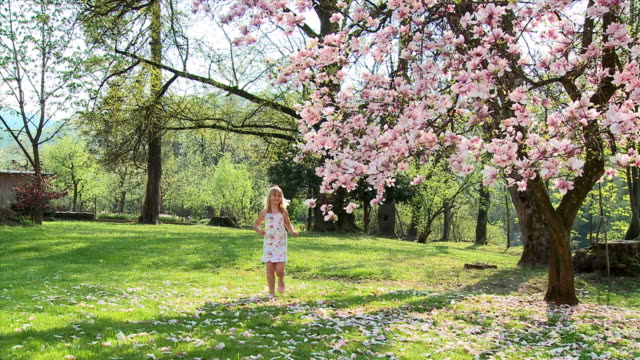 ws girl (8-9) running toward magnolia tree, smelling flower, vrhnika, slovenia - vrhnika stock videos and b-roll footage