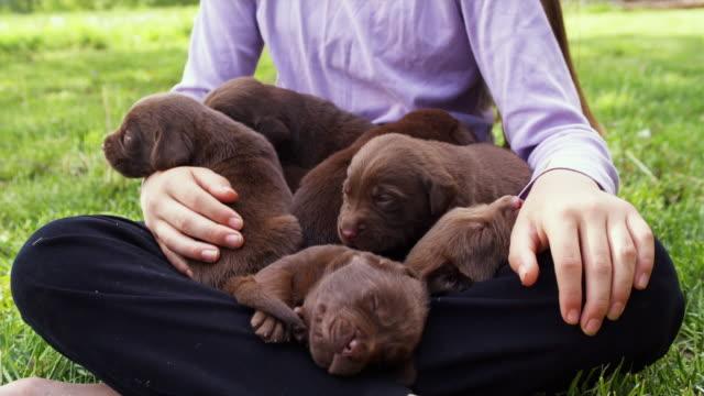 vidéos et rushes de cu girl (10-11) sitting on grass with puppies on lap / sunderland, vermont, usa - prendre sur les genoux