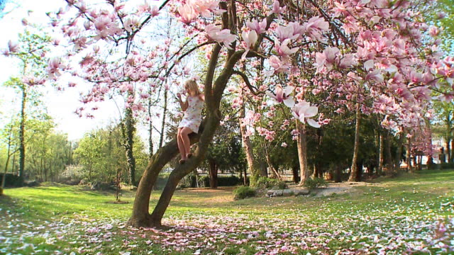 slo mo ws girl (8-9) sitting on magnolia tree, smelling flower, vrhnika, slovenia - vrhnika stock videos and b-roll footage
