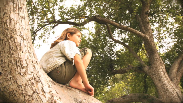 ms la girl (6-7) sitting on tree, flagstaff, arizona, usa - flagstaff arizona video stock e b–roll