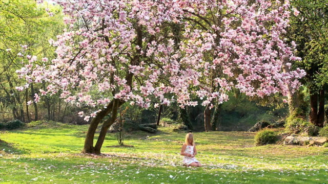 ws girl (8-9) sitting under magnolia tree, picking flower petals, vrhnika, slovenia - vrhnika stock videos & royalty-free footage