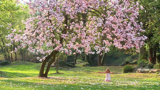vidéos et rushes de slo mo ws girl (8-9) sitting under magnolia tree, throwing flower petals in air, vrhnika, slovenia - jetée