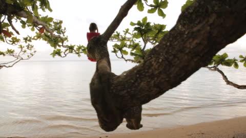 ws pov girl standing on tree looking at ocean / anini, kauai, hawaii, usa  - kauai stock videos & royalty-free footage