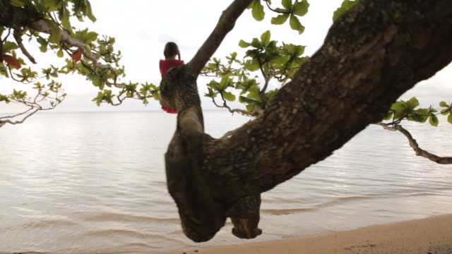 ws pov girl standing on tree looking at ocean / anini, kauai, hawaii, usa  - isola di kauai video stock e b–roll