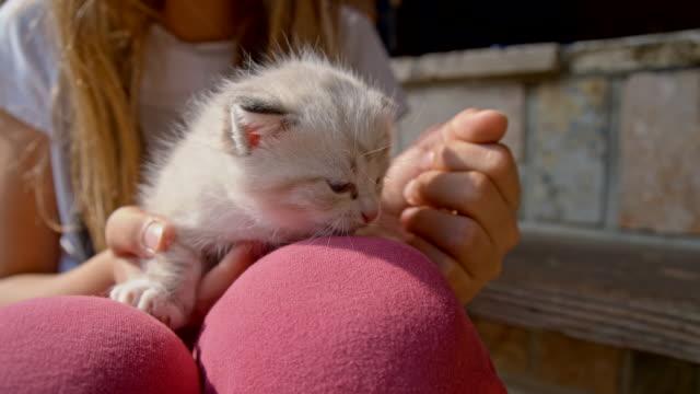 MS Menina Acariciar um Filhote de Gato