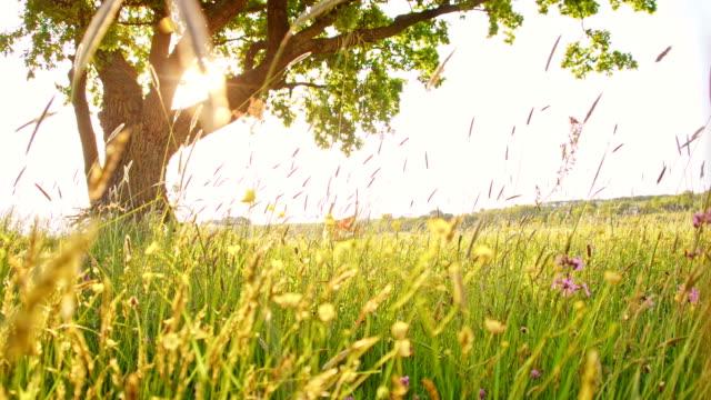 SLO MO Girl swinging on a tree swing in meadow