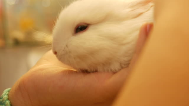 girl take care little bunny - petshop stock videos and b-roll footage