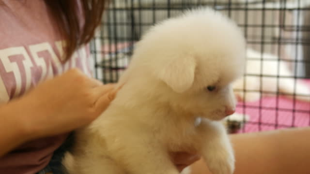 girl take care little puppy - petshop stock videos and b-roll footage