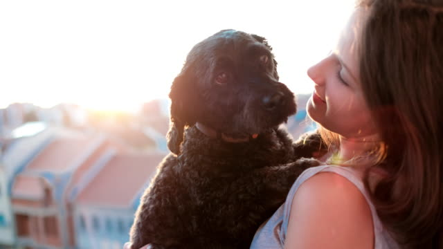 girl take care of little dog - bichon frise stock videos and b-roll footage