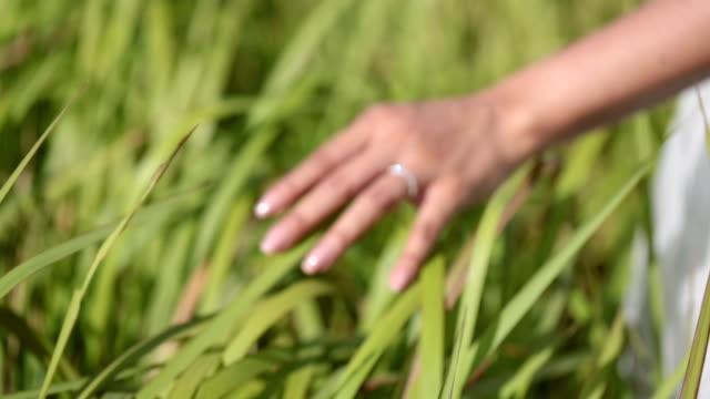 a girl takes a grass hand. - braccio umano video stock e b–roll