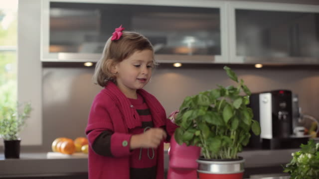 ms girl (2-3) touching and smelling potted basil plant in kitchen / kleinmachnow, brandenburg, germany - basil stock videos and b-roll footage