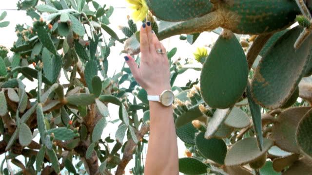 Girl touching cactus and pierce her hand