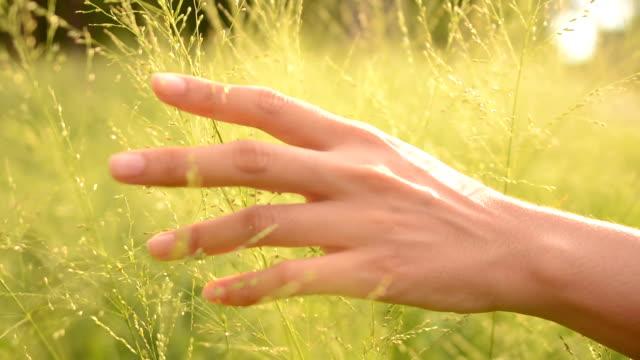 vidéos et rushes de fille de toucher l'herbe - suivre activité avec mouvement
