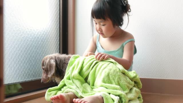 犬を乾かしてタオルをする女の子 - 乾かす点の映像素材/bロール