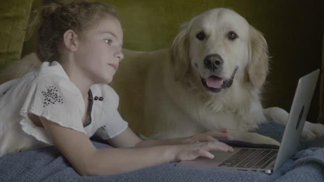 vidéos et rushes de girl using laptop by golden retriever on sofa - golden retriever